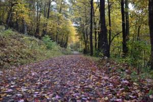 Leaf covered path